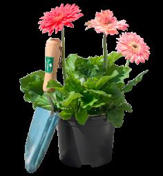 2 Litre Potted Plants