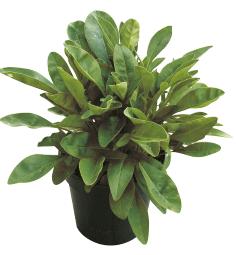 9cm Potted Plants